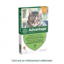 Cachet Anti Puce Chats Veterinaire
