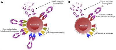 Anti U Antibodies
