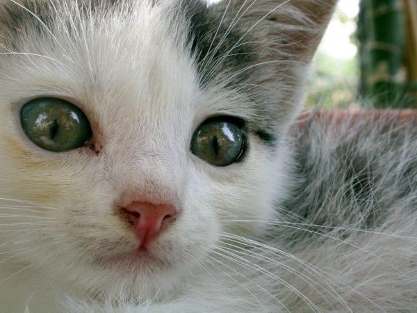 Prix Vermifuge Chat Vétérinaire