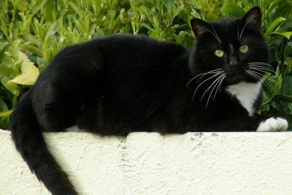 Répulsif Pour Chat Dans Mon Jardin