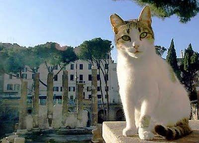 Vermifuge Pipette Pour Chats