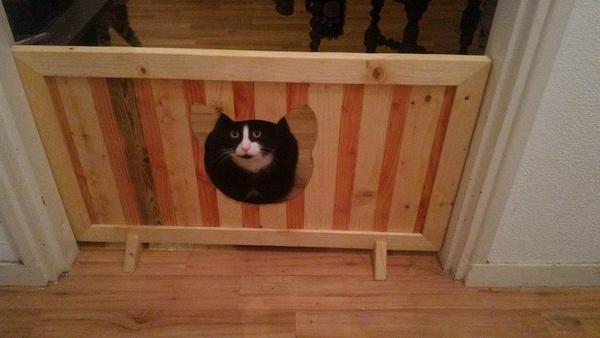 Barrière Ultrason Pour Chat