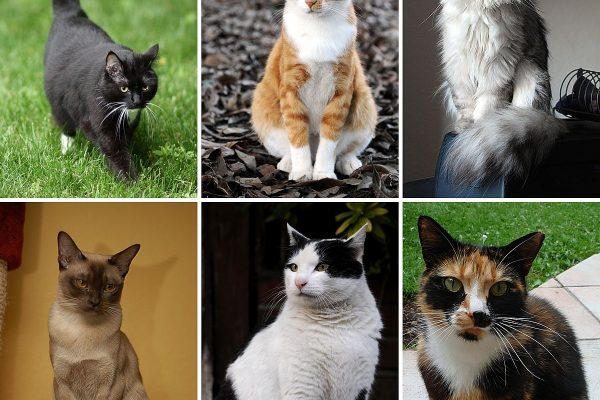 Comment Empoisonner Les Chats