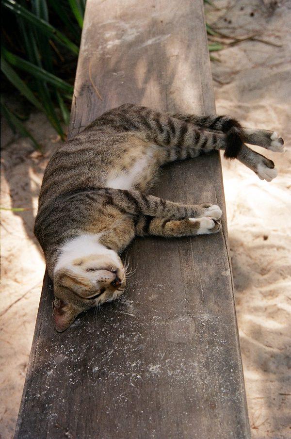 Diarrhée Du Chat Que Faire