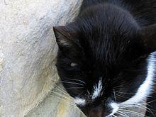 Mon Chat A La Diarrhée Que Faire