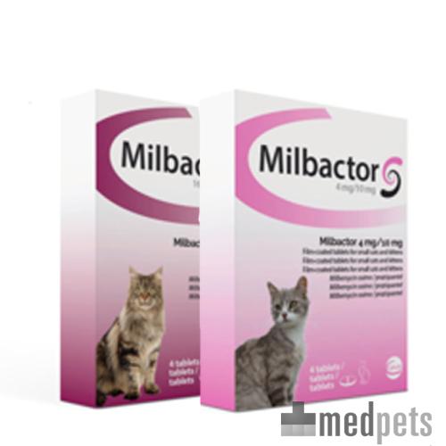 Vermifuge Milbactor Chat