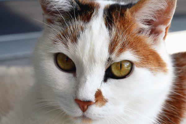 Appareil Pour Éloigner Les Chats