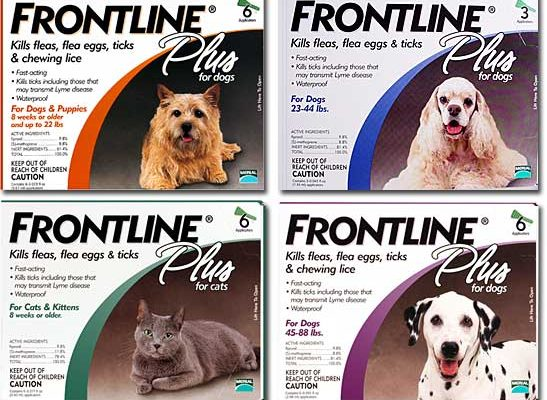 Frontline Chats