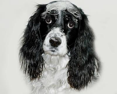 Shampoing Chien Puppy