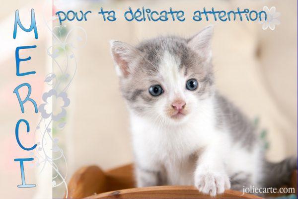 Video Pour Les Chats