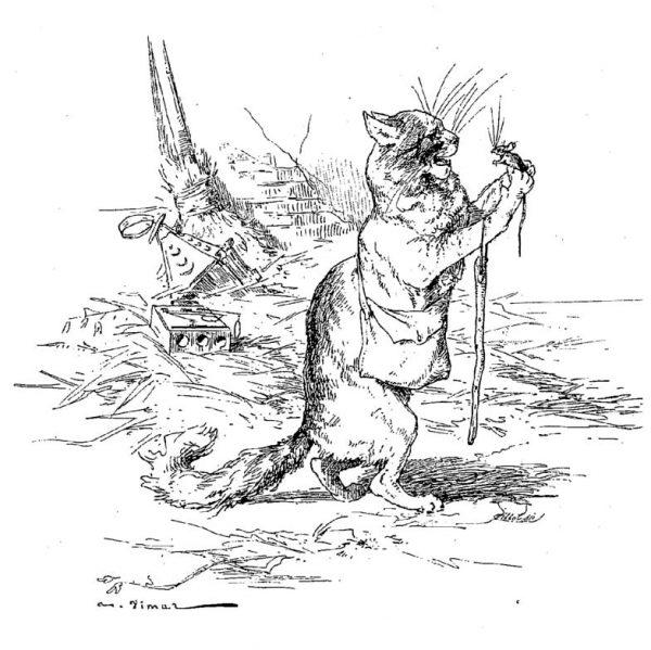 Vieux Chat Et Diarrhée