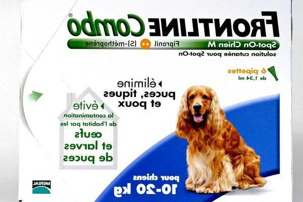 Collier antipuce pour chien