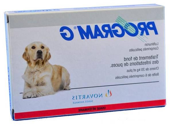 Collier antipuce chien