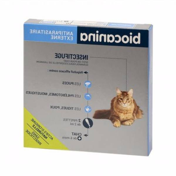 pipette antipuce chat