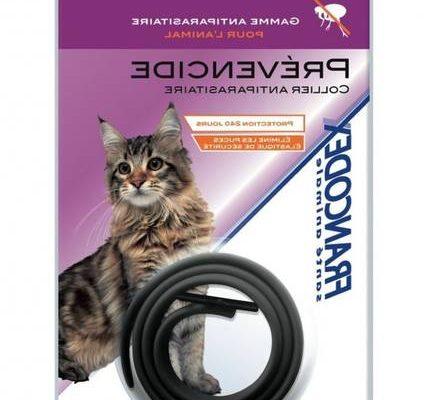 Antipuce pour chat