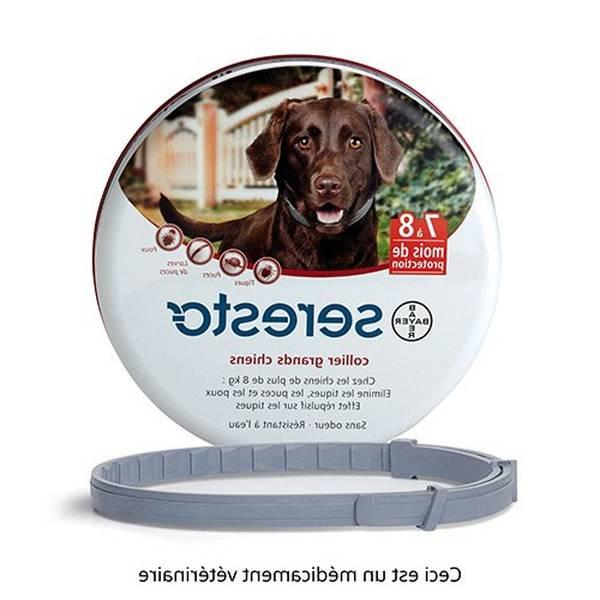 antipuce pour chien